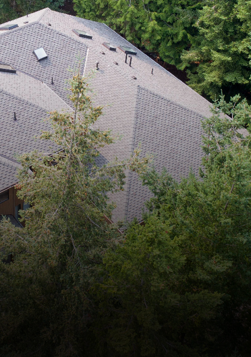 PABCO® Roofing Products Now Feature Algae Defender®